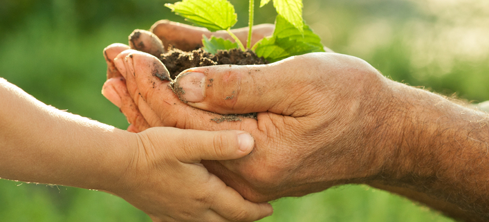 Hands of elderly man and baby holding a young plant against a green natural background in spring.